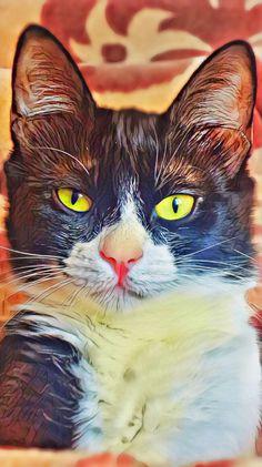 #cat #catlove #kedi #bleack  #white #turkeycat