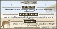 What does a cougar symbolize, as a spirit animal, dream interpretation of a black cougar, spiritual meaning in Native American Culture Lion Spirit Animal, Animal Spirit Guides, Your Spirit Animal, Animal Meanings, Animal Symbolism, Lion Meaning, Power Animal, Animal Magic, Dream Symbols
