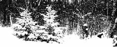 """""""a picture snowing"""" Happy Holidays, Poetry, Snow, Black And White, Pictures, Photos, Happy Holi, Blanco Y Negro, Poems"""