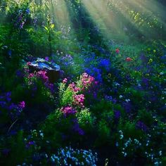 """you could think at the movie """"the secret garden"""", it could posted right out of it, but this is the beauty of nature, not a fantasy; Sunbeams in the forest. Beautiful World, Beautiful Gardens, Beautiful Places, Trees Beautiful, Beautiful Morning, Beautiful Sunrise, All Nature, Amazing Nature, Autumn Nature"""