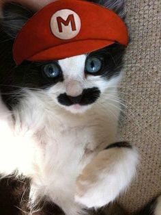 Super Mario Cat | Community Post: 31 Cats That Are Doing Halloween Better Than You