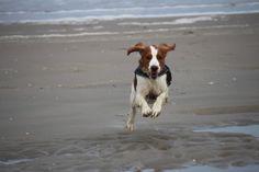 Farah lekker op snelheid.  Copyright: Van Geerdersbeek Photography