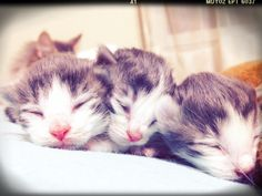 Hello Sweet Babies <3