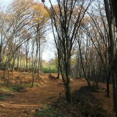 Malm, Trunks, Plants, Drift Wood, Tree Trunks, Plant, Planets