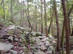 cool forest boulders - Google Search