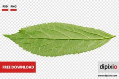 Free photo of underside of green leaf for download on www.dipixio.com #dipixio #freephoto #freebie #free #photo #freedownload #stockphotos #photography #graphics #photos #blog #blogger #pic #freeimages #stock