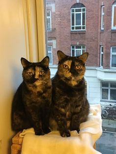 Princess Caroline and Bandit sisters up to no good! by eoinm. Funny Cats And Dogs, Cute Cats And Kittens, Kittens Cutest, Funny Animals, Cute Animals, Kitty Cats, Cat Images Hd, Funny Cat Images, Funny Cat Pictures