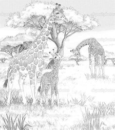 mom and baby giraffe coloring pages safari giraffes coloring