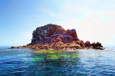 someday i will swim with dolphins in the Sea of Cortez near the Isla Espiritu Santo!