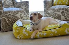 Bamboo Bed Mustard-Bold New Dog beds at 3 Shades of Dog Great new Spring Dog beds with matching throw pillows at 3 Shades of Dog www.3ShadesofDog.com