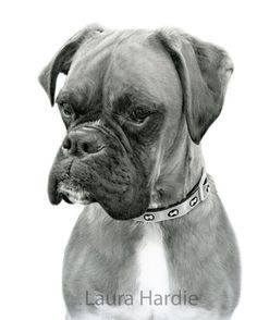 These dog drawings by Laura Hardie look so much like photos, you'll want to pet them. Using graphite and colored pencils, her portraits will blow your mind. Animal Drawings, Pencil Drawings, Art Drawings, Pencil Art, Boxers, Boxer Dogs, Pencil Drawing Tutorials, Drawing Tips, Drawing Ideas