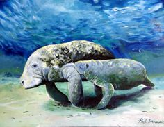 manatee and calf, Lithograph by paul sandilands | Artfinder