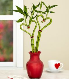 lucky bamboo is the perfect gift for the home or office because it requires very little care this inexpensive greenery comes in a variety of twisted shapes charming office plants