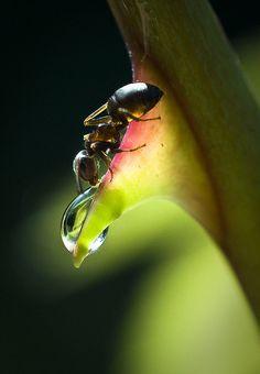 Natures Doorways - animalgazing: The sip by csabatokolyi on Flickr.
