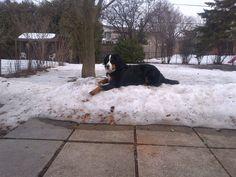 Snow Stormer