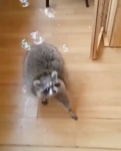 Animals are Awesome ❤❤❤ Cute Creatures, Beautiful Creatures, Animals Beautiful, Fluffy Animals, Animals And Pets, Baby Animals, Cute Funny Animals, Funny Cute, Cute Animal Gif