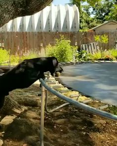 Dogs Find Joy in the Simplest Things - Tiere - Itens para Cães Funny Animal Videos, Cute Funny Animals, Cute Baby Animals, Funny Dogs, Animals And Pets, Funny Husky, Cute Puppies, Cute Dogs, Dogs And Puppies