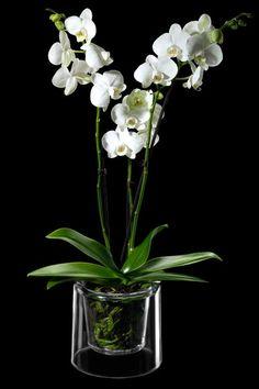 conjunto de maceta y plato, ideal para orquideas, y aplicable a otras plantas como anthurium, spathiphyllum, guzmania, y un largo etc... http://masgabana.com