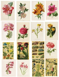 Great vintage print outs!