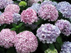 Las 7 plantas y flores que no dan alergia - Noticias de El tiempo