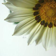 10:45 #photo #photography #picture #flowers #flowerslovers #flowerzdelight #great_flowers #flowersofinstagram #flowerstalking #softfocus #flowersandmacro #symply_flowers #macrophotography #blooming_petals #tv_flowers #ig_japan #ig_artistry #loves_united_flowers #petal_perfection #tv_foggy #macro #macroclique #tv_depthoffield #panasonic #lumixg6 #sigma #indonesia_greatshots #tv_closeup #japan #sapporo