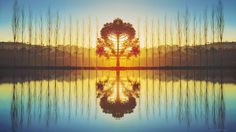 Brazil Araucaria Lake Nature Water Mirror Peaceful Mivisions Photography Reflection Tree