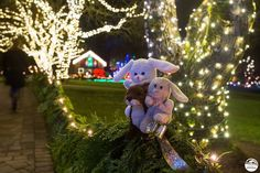 Monorail Bunny, Otter and Junior at the Butchart Gardens Otters, Bunny, Gardens, Magic, Explore, Vacation, Christmas Ornaments, Holiday Decor, Art