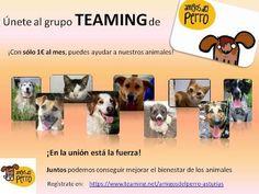 M Amigos el Perro - NOTICIAS