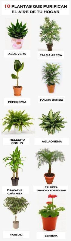 10 plantas para purificar el aire de tu hogar. #plantas #infografia