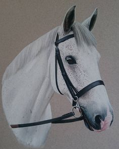 """""""Mi piace"""": 31, commenti: 3 - Lindsay Hill (@lindsay_hill_artist) su Instagram: """"Grey done for Christmas #equineartist #equinepportraits #horses #horsepainting #artist"""""""