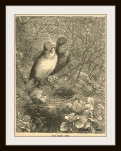 Antique Book Print - The First Nest  1886 by KnickofTime on Etsy, $5.00