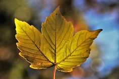 Free Image on Pixabay - Autumn, Leaf, Collapse, Bokeh Bokeh, Permaculture, Free Pictures, Free Images, Garden Workshops, Pictures Of People, Garden Supplies, Photo Wallpaper, Canon Eos
