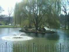 Gypsy Hill Park Duck Pond Staunton VA.  Spent lots of time with feathered friends here.