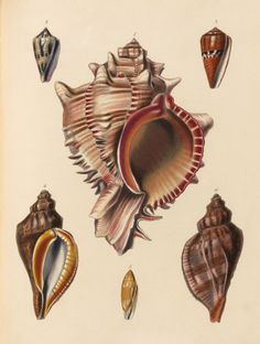 'The zoology of Captain Beechey's voyage / compiled from the collections and notes made by Captain Beechey^, the officers and naturalist of the expedition, during a voyage to the Pacific and Behring's Straits performed in His Majesty's ship Blossom, under the command of Captain F. W. Beechey … in the years 1825, 26, 27 and 28, by J. Richardson … [et al.] ; illustrated with upwards of fifty finely coloured plates by Sowerby'
