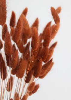 Dried Flowers Bouquet Bridesmaid Proposal Gifts Wedding Menu Ideas Buffet Best Plants For Dry Climate Orange Aesthetic, Beige Aesthetic, Motif Art Deco, Bunny Tail, Rust Color, Dried Flowers, Brown Flowers, Flowers Bunch, Earth Tones