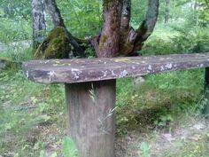 Pölkystä puuhun