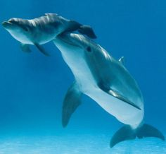 dolphins..