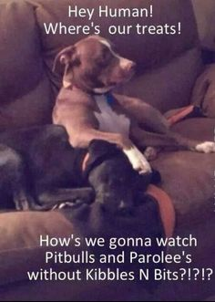 American Pitbull – All You Want to Know About This Breed – Pets and Animals Funny Animal Pictures, Funny Animals, Cute Animals, Puppy Pictures, Baby Animals, I Love Dogs, Cute Dogs, Puppy Love, American Pitbull