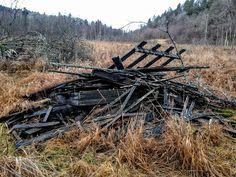 naturensdronning: Dagens utvalgte - 23. des 2015