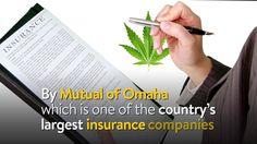 Successfull Marijuana Business Owner Denied Life Insurance