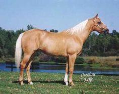 Image result for sabino roan foal