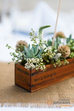 Succulent Centerpiece- wedding by Style & Grace Events