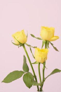 Cómo hacer cuentas caseras de pétalos de rosas secas | eHow en Español