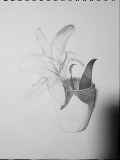 Lily Cup