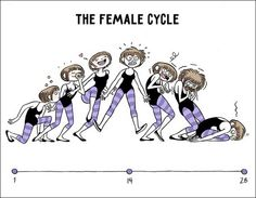 The female cycle