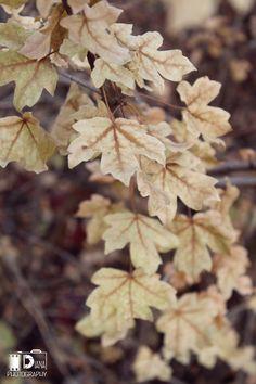 Осенние листья Autumn Leaves