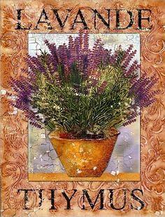 Lavande Thymus
