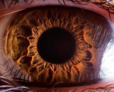 The fantastic macro photos of the human eye by Suren Manvelyan.Incredible close-up photos of Your beautiful eyes Eye Close Up, Extreme Close Up, Photos Of Eyes, Close Up Photos, Human Eye, Human Body, Gif Kunst, Photo Oeil, Foto Macro
