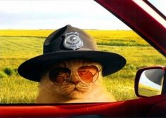 """""""Alright meow, do you know how fast you were going?"""" ... """"Excuse me, did you just say 'meow'?"""" (Super Troopers)"""