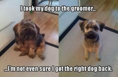 This is hilarious! #NotSureSameDog #LoveDogs